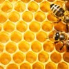 Urban Beekeeping and Local Honey