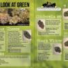 A Closer Look At Green