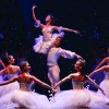 RI Ballet: Meeting Autumn with Grace