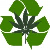 How Green Is Your Green? The impact of the cannabis industry on the environmental crisis
